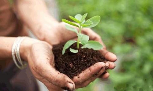 生物菌肥有什么显著的优势?