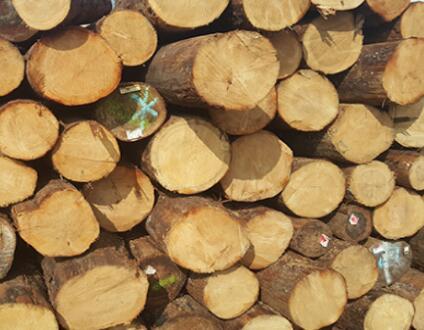 太仓木材受欢迎的原因何在?