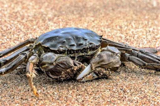 影响阳澄湖大闸蟹价格的三个因素