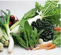 广州蔬菜配送的措施有哪些