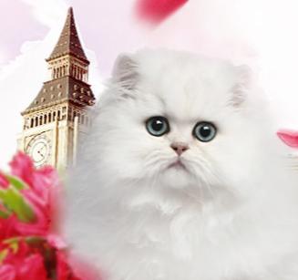 加菲猫专卖店解读让宠物体质更好需注意什么