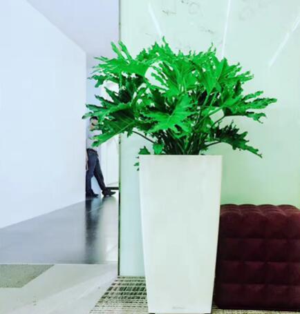 绿植租摆服务导入的三大特点