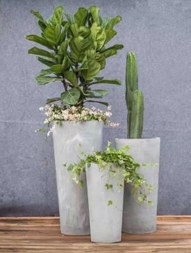 绿植租赁当中最受欢迎的植物类型有哪些?