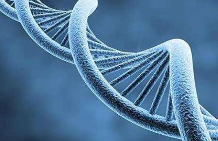 高危生子做DB基因检测的作用有哪些?