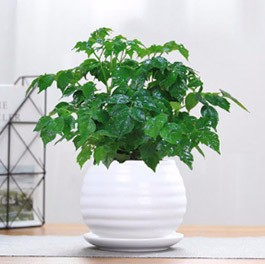 鲜花绿植养护租赁合作大幅发展的原因