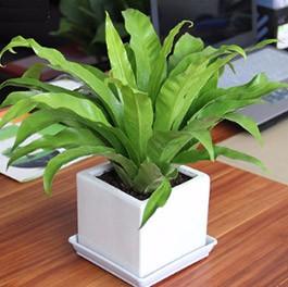 鲜花绿植养护机构解析:办公场所鲜花绿植的选择重点