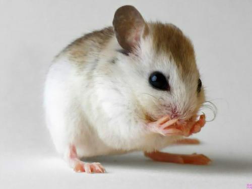 宾馆灭老鼠的注意事项有哪些?
