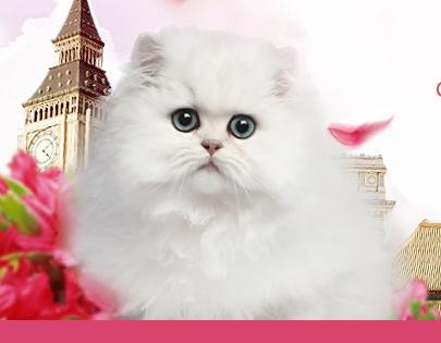 北京正规猫舍受大家青睐的原因是什么