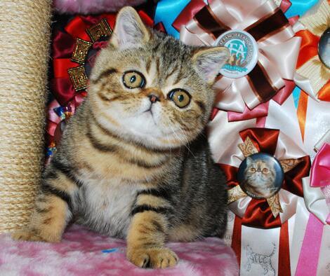 在北京正规猫舍买猫需要注意什么