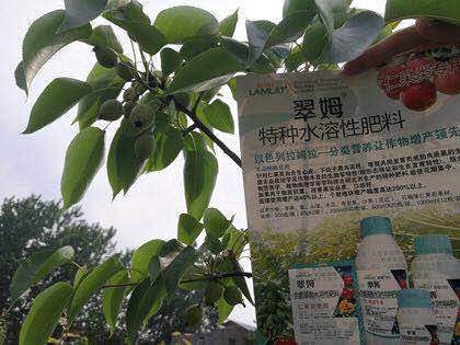 怎么样才能更好地使用进口冲施肥