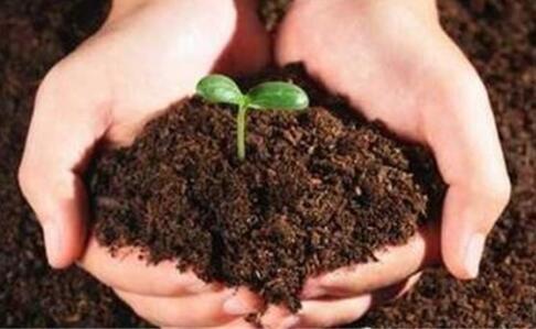发展生物肥料的重要意义有哪些