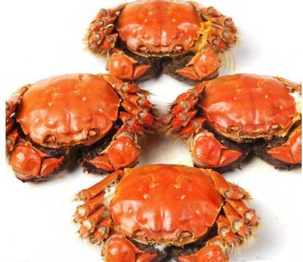 影响阳澄湖螃蟹销售的因素有哪些