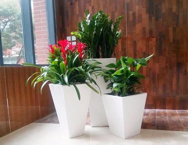 盆景花卉租赁服务的好处有哪些