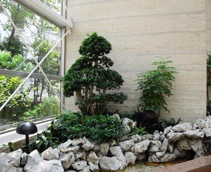 盆景花卉租赁服务为什么广受市场欢迎