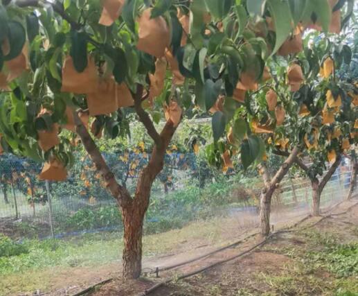 应用果树滴灌设备的好处有哪些