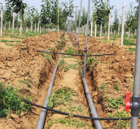 使用果樹滴灌設備的注意事項有哪些