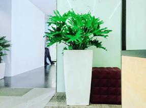 花卉租赁公司如何保证花卉长势喜人的呢?