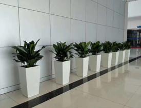 如何判断花卉租赁公司提供的植物质量好不好?