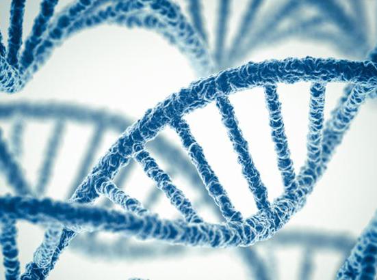 基因检测公司具有哪些特点
