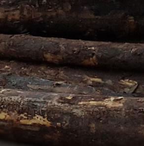 辐射松原木的选购技巧有哪些呢?