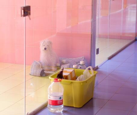 选择北京宠物寄养中心有什么技巧