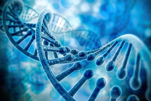 基因检测公司未来有何发展前景