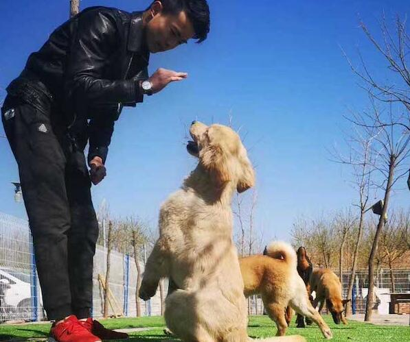 哪一类狗可以到训狗学校进行训练