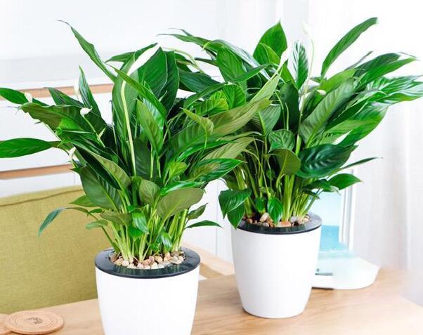 上海植物租摆公司的主要服务范围有哪些