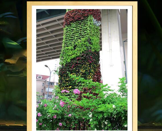 选择上海植物租摆时需要注意哪些问题
