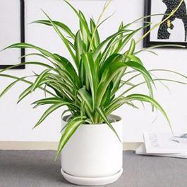 上海植物租摆深受用户欢迎的原因