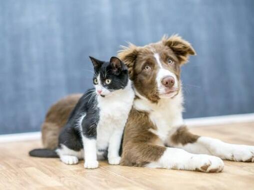 宠物医师网简介冬季护理宠物要谨防哪些疾病的发生