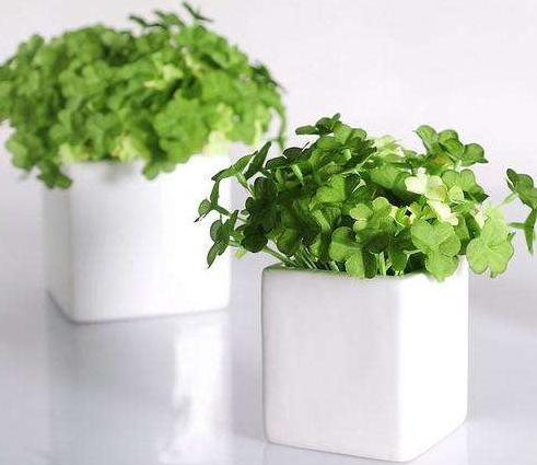 办公室植物租赁有哪些选择