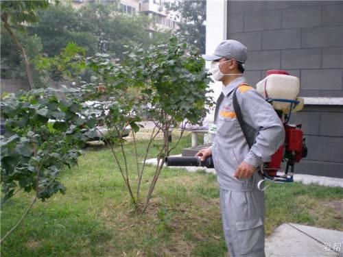 选择深圳除虫公司要从哪些方面入手?