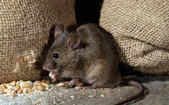 选择专业灭鼠公司可以从哪些方面入手