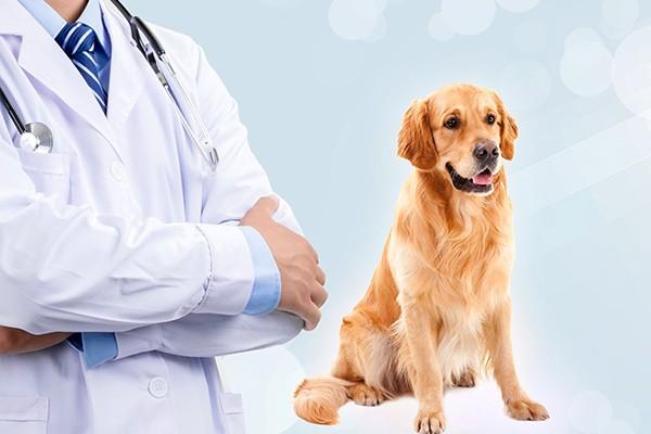 宠物保健品代理的市场前景如何
