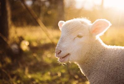 羊奶粉为何如此受欢迎